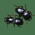 insect krekels en beestjes
