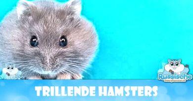 Trillende Hamsters