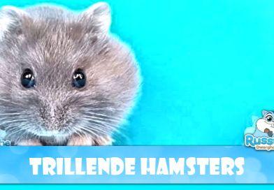 Parkinson bij de zwarte en zwart gerelateerde kleuren Russische dwerghamster – Conclusie na bestudering gemelde hamsters