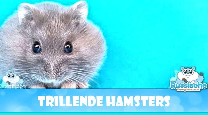 zwarte trillende hamsters