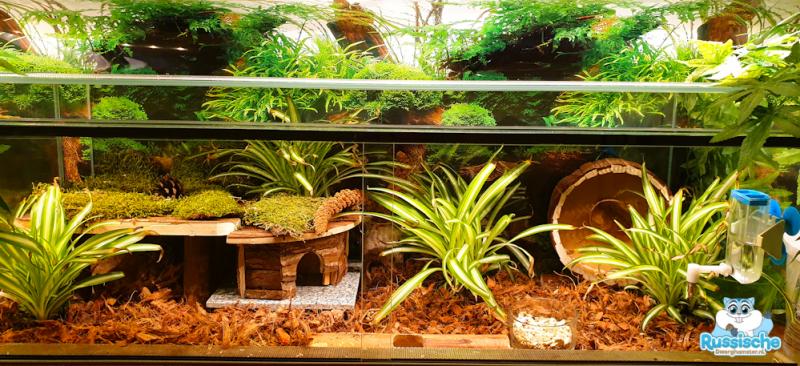 hamster plantjes