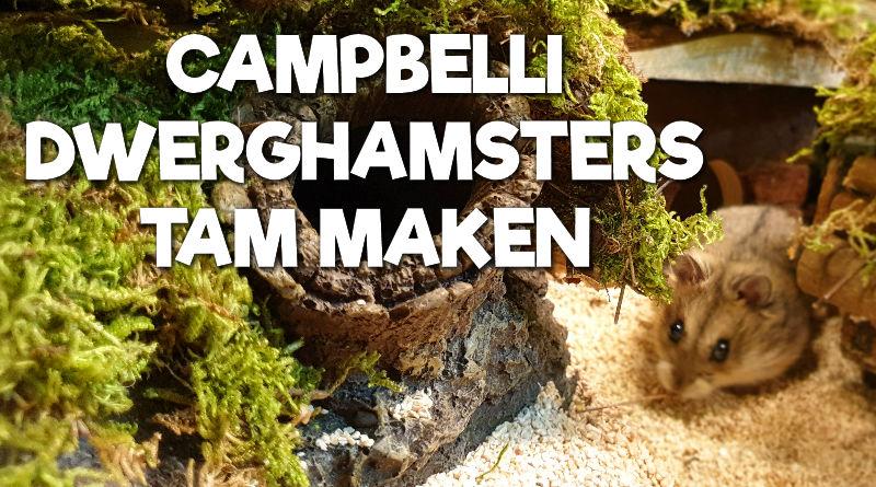 Campbelli Dwerghamsters tam maken