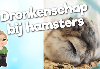 dronken hamster