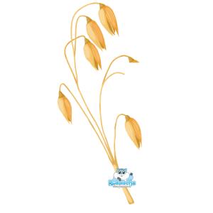 brinta tarwe oogst zaden