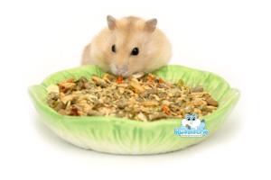 hamster voerbakje met hamstervoer voor dwerghamsters