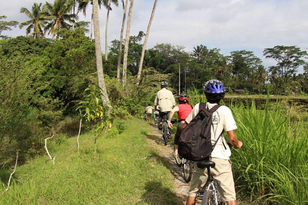 Cycling di Bali Hai - Desa Pengelipuran - Sawah