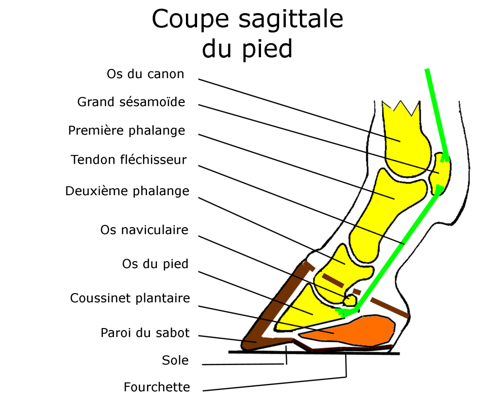 taille haie electrique
