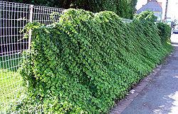 cloture jardin brico