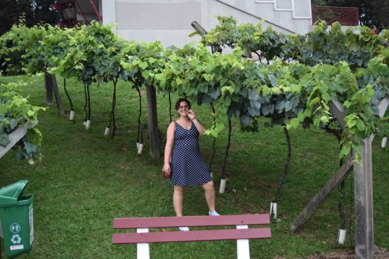 Festa da Uva
