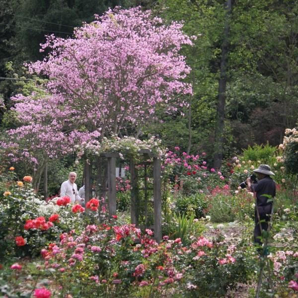 gardens - descanso guild