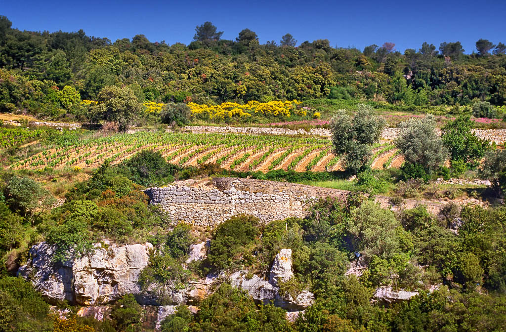 Aude, Minervois, Occitanie, Patrimoine, Région Languedoc, South of france, Sud de France, Terroirs, Vigne, Vignes