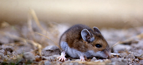 Local public health agencies confirm case of Hantavirus ...