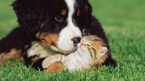 amor incondicional c O amor incondicional dentro de um relacionamento