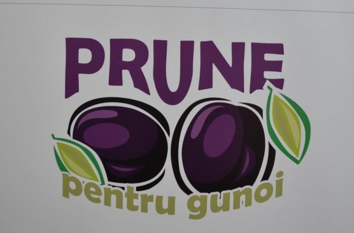 """""""Prune pentru gunoi"""" – o legendă transformată într-un proiect educativ"""