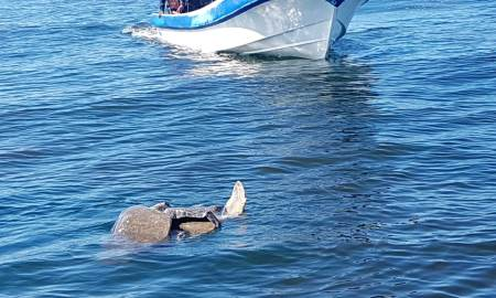 muerte tortugas
