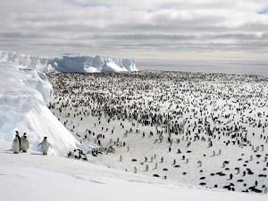 Pinguinos de la Antártida en la nieve