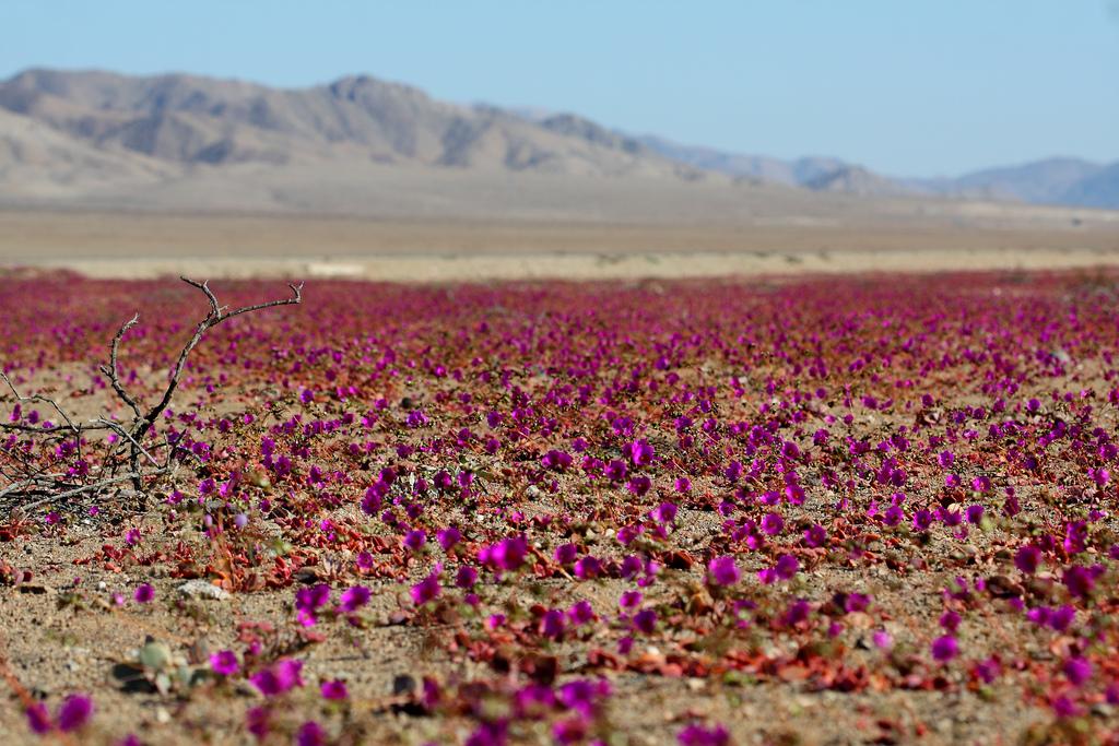 desierto floriod