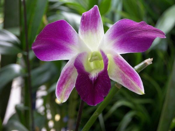 orquidea (3)