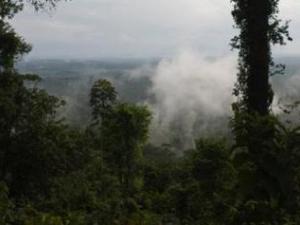 Panorámica de la amazonía brasileña