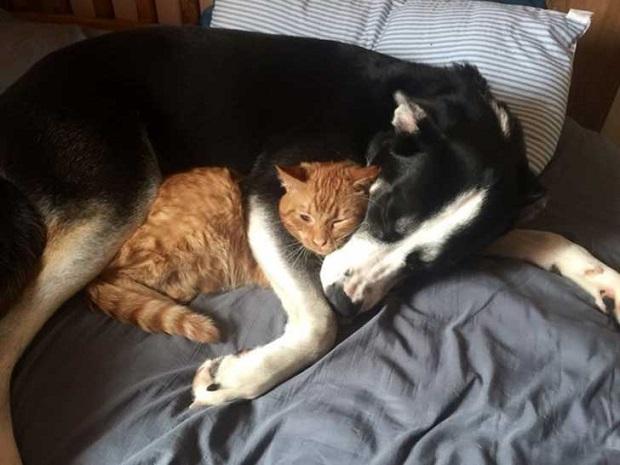 los perros son el mejor amigo