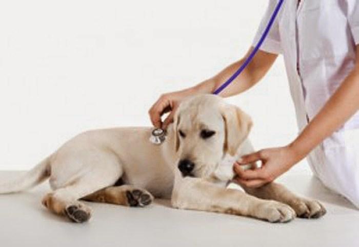 seguros de animales