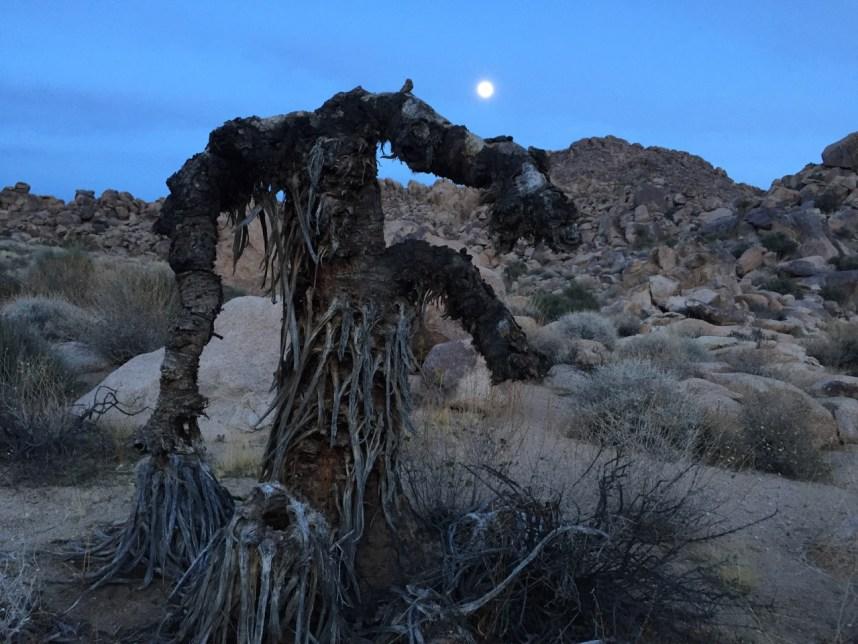 Yucca Man