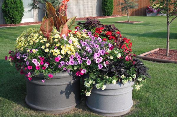 Self Watering Savings Equinox Desert Planters