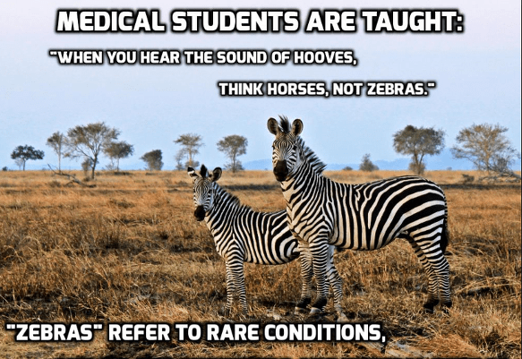 "Image of two zebras, looking towards the camera, standing in a dried grassland, trees in the far background.  The text on the image says ""medical students are taught: ""When you hear the sound of hooves, think horses, not zebras."" ""Zebras"" refer to rare conditions."""