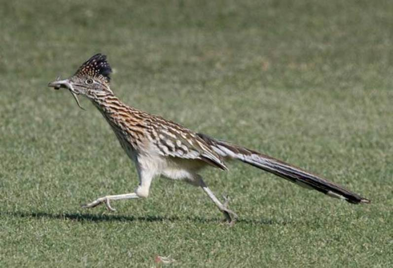 Image result for roadrunner