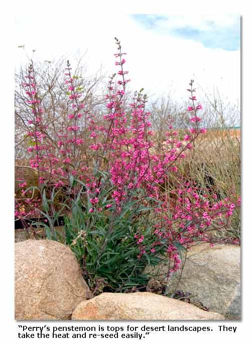 desert plants landscaping