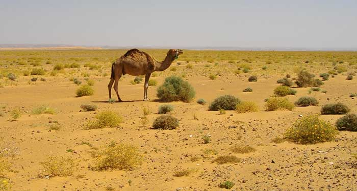 » NATURE AMAZING ANIMALS AND PLANTS OF THE SAHARA DESERT