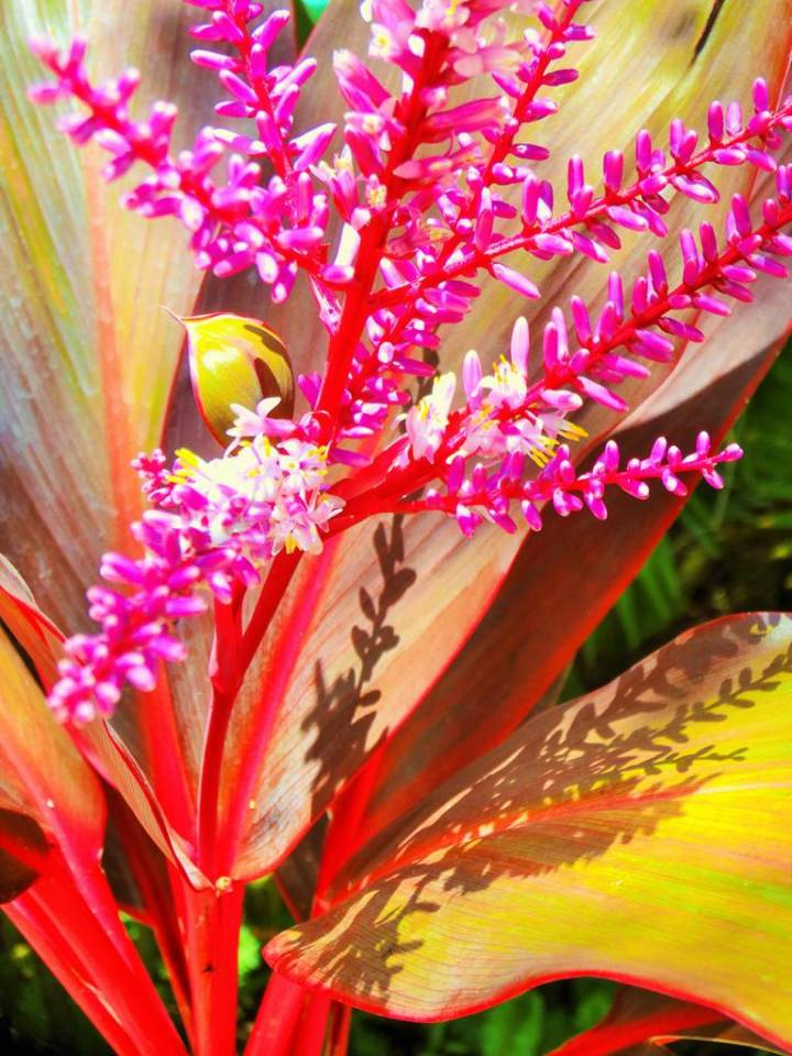 Fleur tropicale rose et jaune