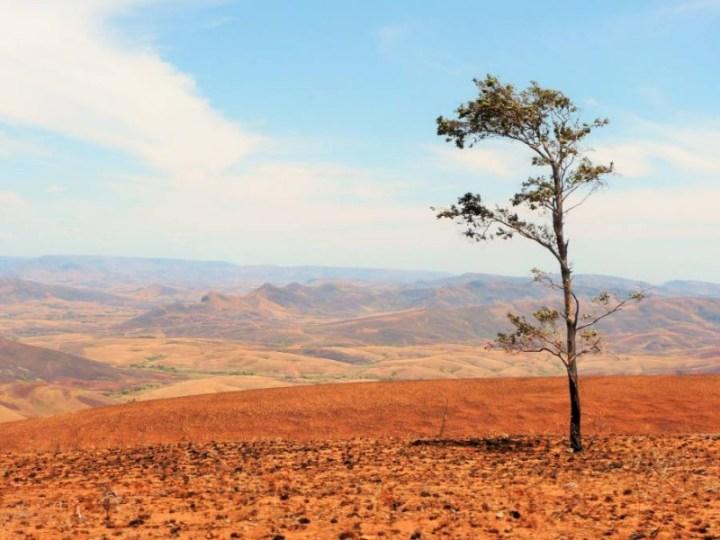 Colline à l'arbre, sur la route d'Ankazobe, Madagascar