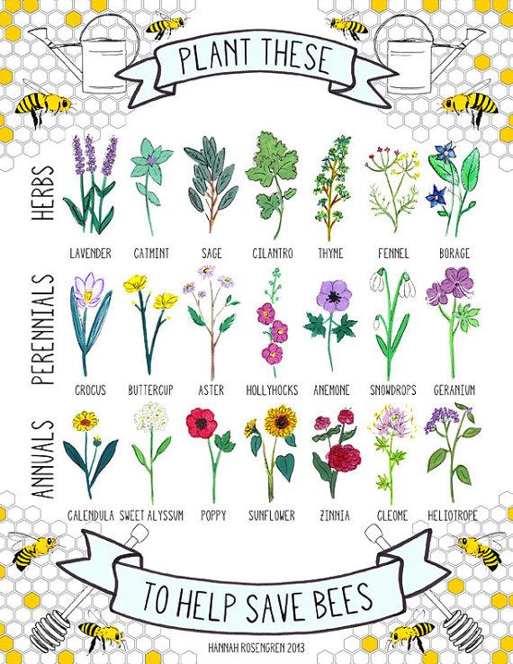 des goûts et des couleurs archives · les plantes mellifères
