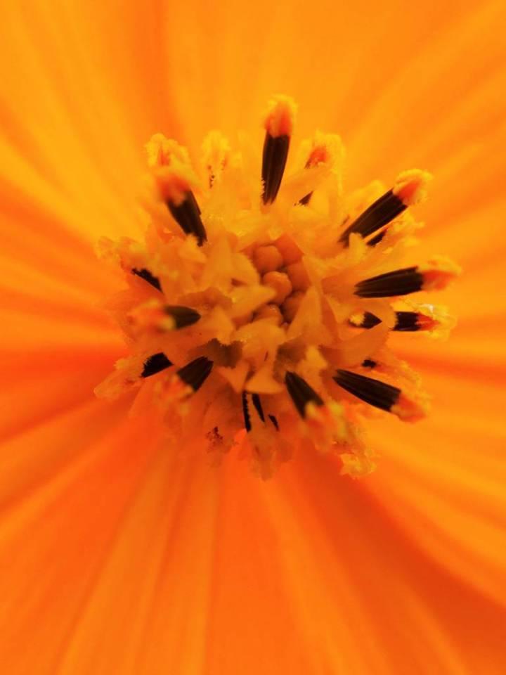 Fleur de soleil