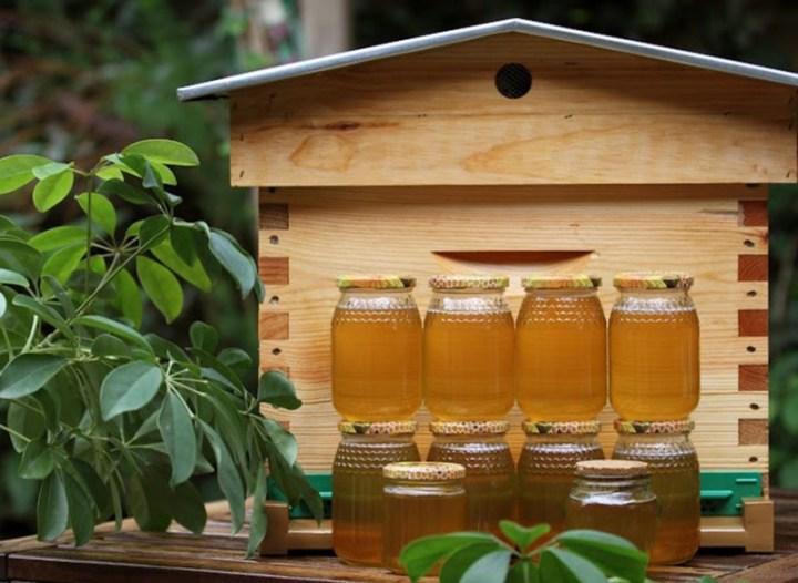 Les 4 saisons de l'apiculture
