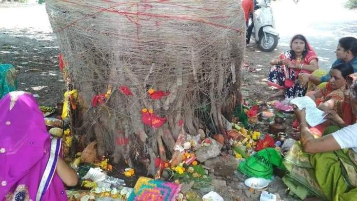 madhubani news with the worship of banyan tree the married couple wished for the long life of their husband