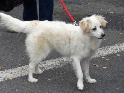 Aïcha - chiens adoptés en 2015