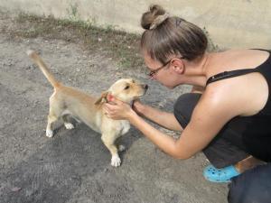 Astérix - chiens adoptés en 2013