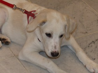 Charly - chiens adoptés en 2014