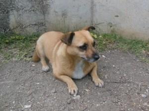 Coco - chiens adoptés en 2013