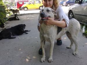 Fidel et ses copains - chiens communautaires
