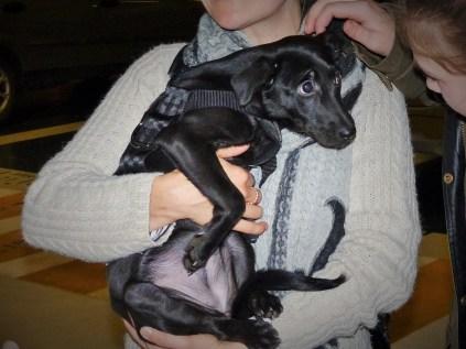 Gloria - chiens adoptés en 2015
