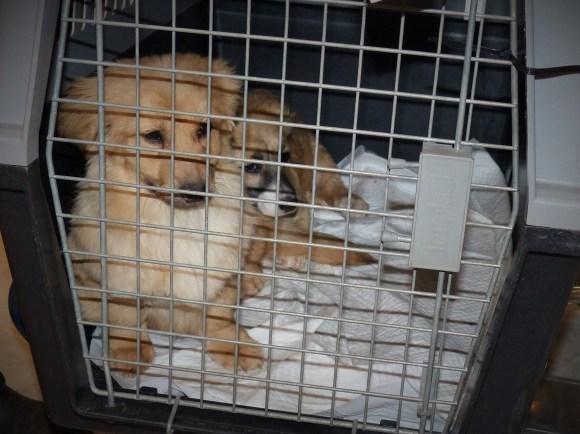 Léna - chiens adoptés en 2015