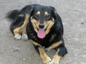 Negrutza - chiens adoptés en 2013
