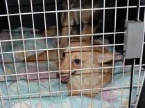 Beauty - chiens adoptés en 2014