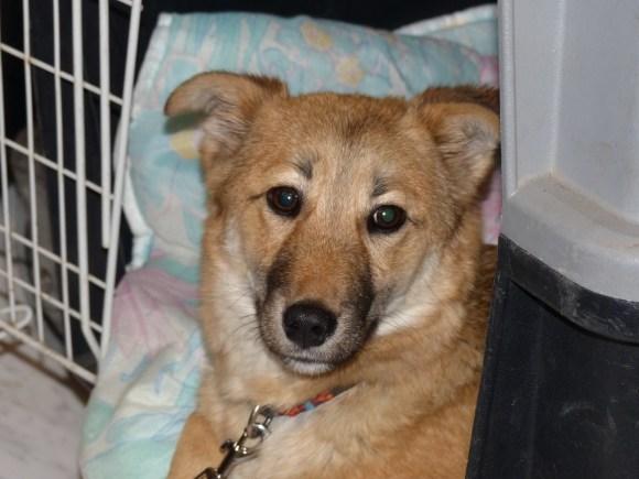 Rony - chiens adoptés en 2014