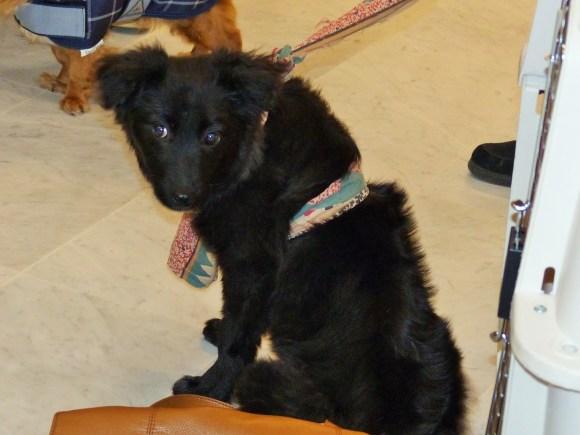 Stella - chiens adoptés en 2014