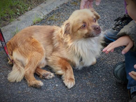Sissy - chiens adoptés en 2014