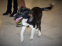 Yoko - chiens adoptés en 2014